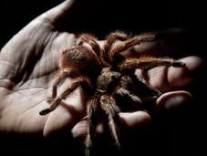 Soñar arañas. ¿Pesadilla buen augurio?