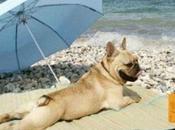 verano refrescante para mascota