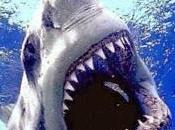 "tiburones, ""musas"" serie"
