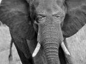 Alfonso Armada elefante blanco