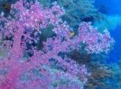 verduras marinas: algas