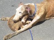 galga cachorros Huelva rescatados