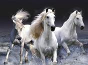 Soñar caballos