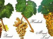Todo saber sobre vino tokay