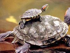 reptiles seres sintientes