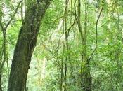Parque Provincial Cruce Caballero, hectáreas para preservar este ambiente natural.