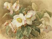 Selección acuarelas flores Flowers Watercolor