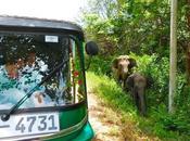 Lanka: cómo dónde alquilar uno!