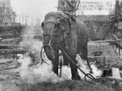 Topsy, elefante condenado silla eléctrica