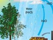 Ahorro eficiencia energética: calderas biomasa