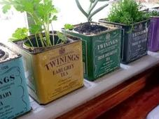 Cultiva plantas casa podrás comerlas siempre quieras