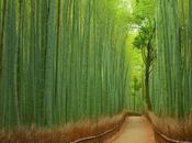 Yuya Horikawa fotógrafo diseñador japonés...