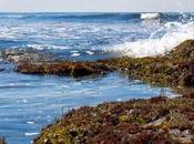 gota hace océano grande. Cuento Estrellas
