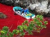 cove; matanza anual delfines Taiji (subtitulado)