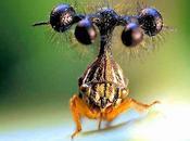 Globulare,el insecto raro mundo