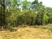 Décadas controle áreas protegidas Caribe costarricense
