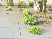 jardín azotea