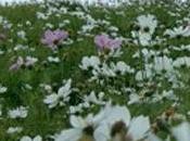 jardín flores silvestres sobre tejado