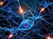 plasticidad cerebro