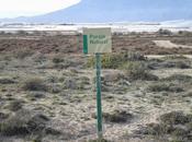 Paraje Natural Punta Entinas-Sabinar (Crítica)