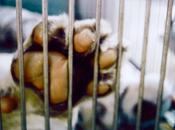 Tráfico animales