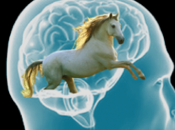 Marta prieto asirón presenta simple-mente caballo