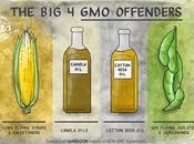 GMO: Organismos modificados genéticamente