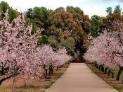 anticipo primavera especial