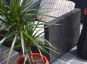 Tres plantas para limpiar aire casa