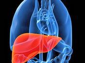 Tratamiento medicina herbal enfermedades hígado