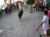 Carcabuey vuelve vivir intensa jornada toro cuerda como gran protagonista