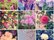 Flores todas partes