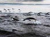 Alianza Océano Antártico pide firmas campaña