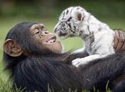extrañas parejas distintos animales harán sonreír