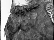 Aves Alto Tajo
