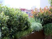 Especial decorar reformar terrazas: cómo ajardinar petos barandillas