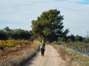 Santes Creus Valls (Tarragona)