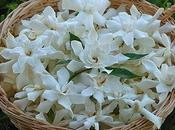 Flores Plantas para Abril