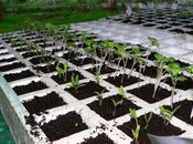 Preparacion semilleros almacigos.