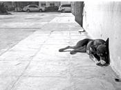 Amaral publica videoclip para nuevo single, 'Ratonera'