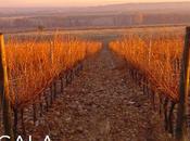 ¿Cual mejor vino español U.S.A?