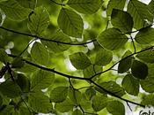 Mantón hojas