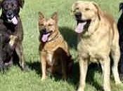 Estrategias inversión: Invierte perros