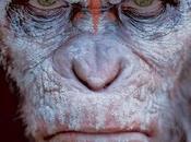 """Ahora castellano nuevo trailer amanecer planeta simios"""""""