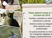"""Concurso fotográfico """"Fauna simpática curiosa"""" Tafe Publicidad"""