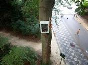 Talking Tree árbol