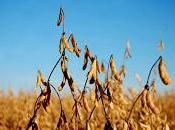 agricultura negada [pelicula completa]