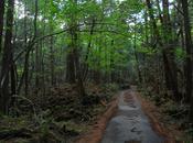 bosque suicidas