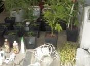 Guardia Civil desmantela invernadero marihuana interior casa Peñaflor