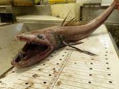Nueva razón para amar peces profundidades: absorben carbono
